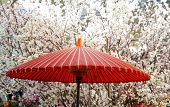 A Parasol And Cherry Tree Of The Park Of The Spring Day When It Was Fine In Japan poster