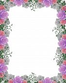 pic of purple rose  - Image and illustration composition lavender pink white roses design element for Valentine Easter party wedding invitation background border or frame with copy space - JPG