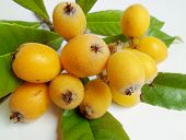 picture of loquat  - Yellow loquat fruits with green leaves on white background - JPG
