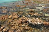 Corals in shallow waters during low tide off the coast  , Thailand