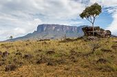picture of bolivar  - Track to Mount Roraima  - JPG