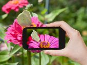 picture of zinnias  - travel concept  - JPG