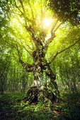 image of sunrise  - Magic Tree - JPG
