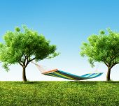 stock photo of grass area  - Relaxing on hammock in backyard with green grass - JPG