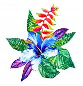 stock photo of jungle flowers  - the flowers are drawn in watercolor by me - JPG