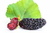 picture of mulberry  - Mulberries with leaf isolated on white background - JPG