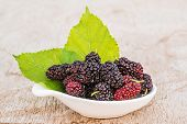 pic of mulberry  - Mulberries with leaf isolated on white background - JPG