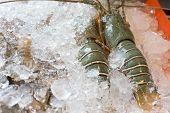 foto of crawfish  - Raw crawfishes on ice in an open buffet restaurant - JPG