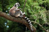 stock photo of rainforest animal  - Ring - JPG