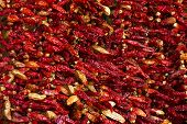 picture of jalapeno peppers  - Colorful chili pepperS hanging for sale at a market - JPG