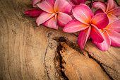 foto of plumeria flower  - Flower plumeria flooring textures red flowers beautiful plants - JPG