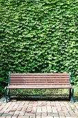 stock photo of ivy  - A park bench against a wall of ivy in a portrait orientation - JPG