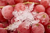 picture of ice crystal  - Background from many frozen currants covered with ice crystals - JPG
