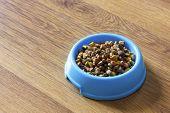 foto of laminate  - Dry cat food in blue bowl isolated on wood laminate floor - JPG