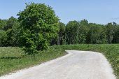 stock photo of dirt road  - Rowan Tree by Dirt Road in northern Sweden  - JPG