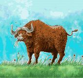 stock photo of oxen  - a heavily built wild ox with backswept horns - JPG