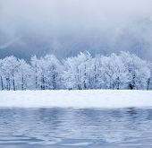 image of sleet  - Winter trees - JPG