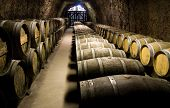 Wine barrels in cellar. Wide angle view.