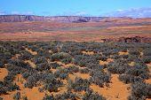 picture of sagebrush  - Painted Desert Green Sagebrush With Vermillion Cliffs Glen Canyon Page Arizona - JPG