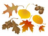 picture of fall leaves  - Autumn decoration elements - JPG