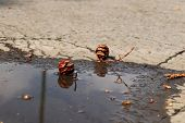 A Two Small Cones Next To Small Puddle. Small Decoration In The Middle Road. Sunny Day poster
