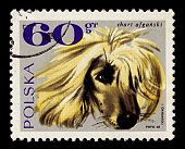 POLAND-CIRCA 1969:A stamp printed in Poland shows image of The Afghan Hound is one of the oldest sig