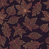 Vector Autumn Seamless Pattern With Oak, Poplar, Beech, Maple, Aspen And Horse Chestnut Leaves Outli poster