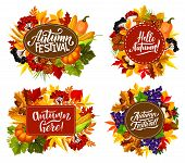 Fall Fest Or Autumn Festival Posters With Seasonal Holiday Quotes. Vector Pumpkin And Corn Harvest W poster