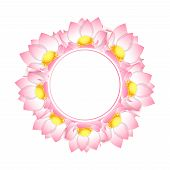 Pink Indian Lotus Banner Wreath. Nelumbo Nucifera,sacred Lotus, Bean Of India, Egyptian Bean. Nation poster