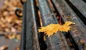 Wet Yellow Maple Leaf On A Bench In The Park. A Rainy Autumn Day Creates A Sad Mood poster