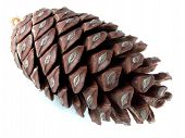 picture of pine cone  - pine cone over white - JPG
