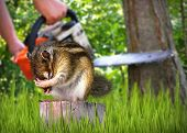 image of deforestation  - wild scared chipmunk and deforestation on background nature destruction concept - JPG