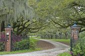stock photo of spanish money  - A canopied plantation driveway in the South Carolina Low Country - JPG
