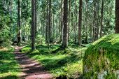 Green Forest landschap In de zomer