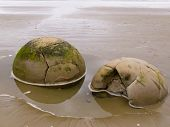 Closeup of famous spherical Moeraki Boulders in NZ