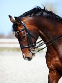 foto of stable horse  - Brown stallion - JPG