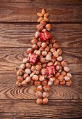 image of hazelnut tree  - Hazelnuts - JPG