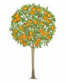 foto of tangerine-tree  - Mandarin tree - JPG