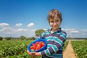 picture of strawberry blonde  - Boy with a bowl of strawberries on a strawberry field - JPG