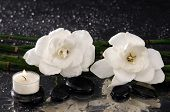 stock photo of gardenia  - spa concept  - JPG