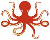 image of aquatic animal  - octopus ocean vector illustration on white background - JPG