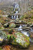 picture of hollow  - Shenandoah National Park - JPG