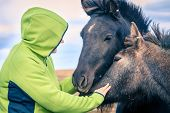 pic of iceland farm  - A woman befriends a group of Icelandic Ponies in the Iceland countryside - JPG