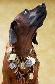 picture of bloodhound  - portrait of super dog  - JPG