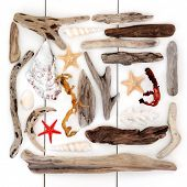 picture of driftwood  - Shell and driftwood abstract collage over wooden white background - JPG