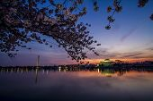 pic of washington monument  - Washington Monument and Jefferson Memorial from Across the Tidal Basin at Sunrise during the Cherry Blossom Festival - JPG