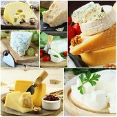 stock photo of brie cheese  - collage of various types of cheese  - JPG