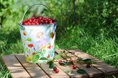 picture of cherry  - Ripe fresh cherries in a colored bucket and ripe cherries with leaves outdoor - JPG