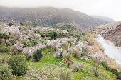 pic of atlas  - North african mountain valley in springtime - JPG
