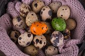 stock photo of quail egg  - Quail eggs in a basket and one orange green egg with pink knit on wooden background - JPG